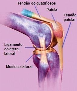 joelho anatomia, cruzados, quadríceps patelar, colateral, meniscos, ossos e tendões, côndilos, fêmur, tíbia, placa tibial, cartilagem, esportes, academia, futebolistas, atletas, vôlei, basquete, tênis, ciclismo