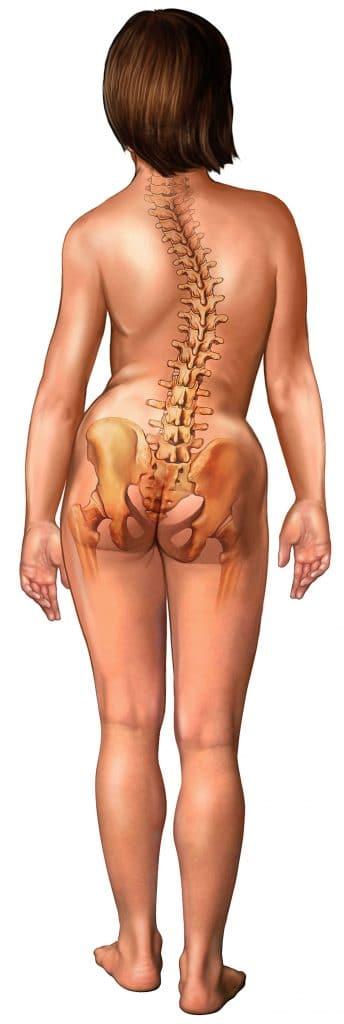 coluna,vertebral