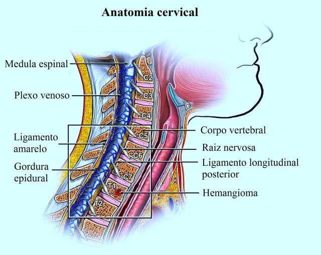 coluna,vertebral,cervical