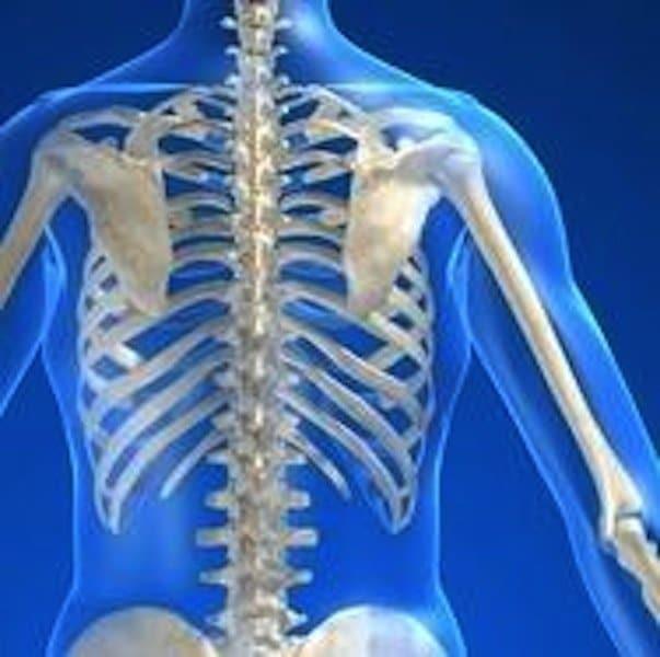 Anatomia, corpo, coluna CERVICAL, dorsal, lombar, costela, nervo, dorso, coluna, coluna, ombro, interscapolare, D1, D2, D3, D4, D5, D6, D7, D8, braço, dor nas costas