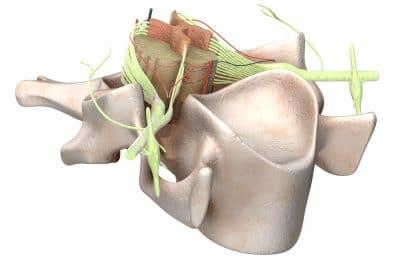 medula-espinal