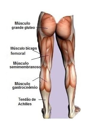 Músculos da perna,anatomia, posteiror,coxa,semimembranoso,semitendíneo,Aquiles, glúteos, isquiotibiais