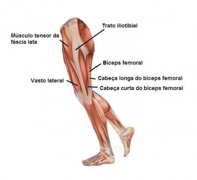 Perna,musculos,biceps femoral,vasto lateral,tensor da fascia lata