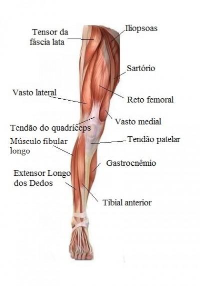 Les o muscular na panturrilha coxa ou bra o e tratamento for Exercicio para interno de coxa