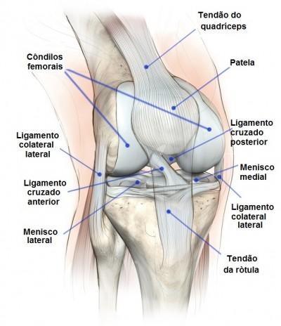 articulação, joelho, sinovite, inflamação, membrana sinovial, sinóvia.