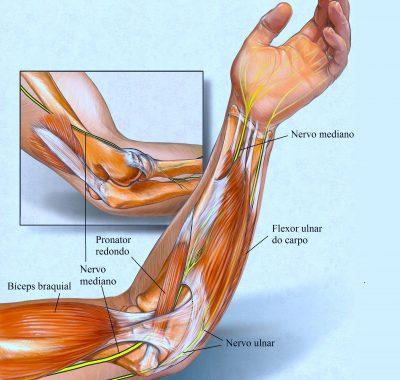 nervo,mediano,ulnar,músculos,antebraço