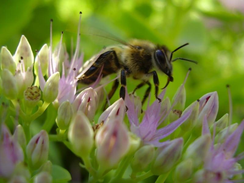 Alergia, pólen, primavera, remédios, anti-histamínicos