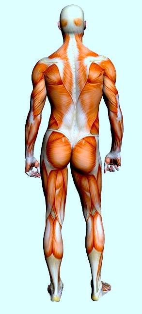 Contratura muscular