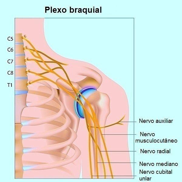 nervos, anatomia, lesões, complicações, ruptura, força, sensibilidade, dor