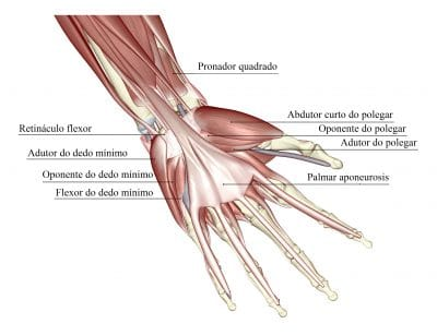 dupuytren,dedos,flexores,palmar,aponeurosis
