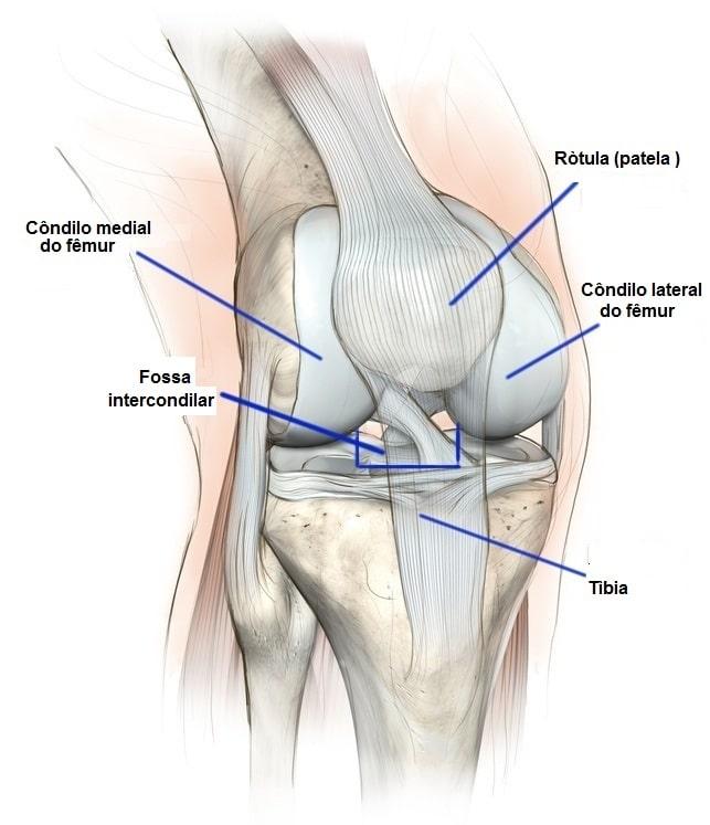 anatomia do joelho, cruzados, colaterais, meniscos, tendões e ossos, patela, côndilos, quadríceps, fêmur, tíbia, platô tibial, cartilagem, esportes, academia, jogadores de futebol, atletas, voleibol, basquetebol, ténis, ciclismo.