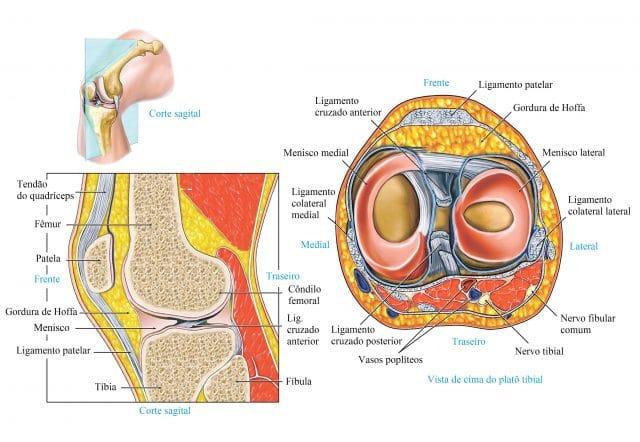 menisco,e,ligamentos,do,joelho