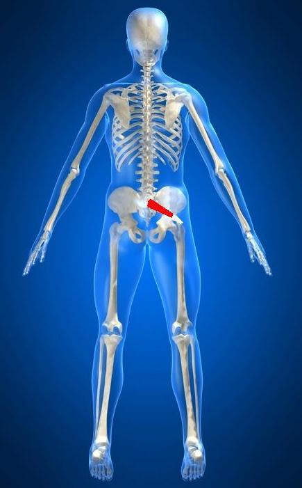 anatomia músculo piriforme, rotator, quadril, sacro, pelve, origem, inserção, trocânter, flexão, glúteo médio, alongamento, contração, avaliação, tendão, quadril, nádegas