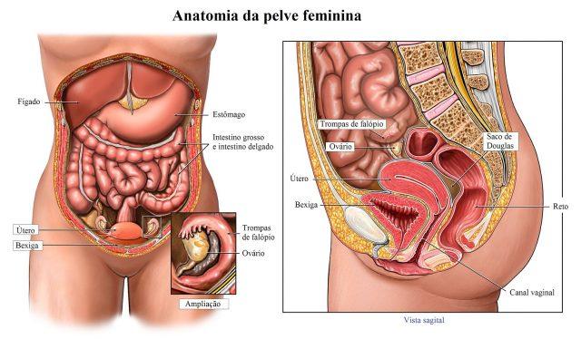 histerectomia,útero,normal