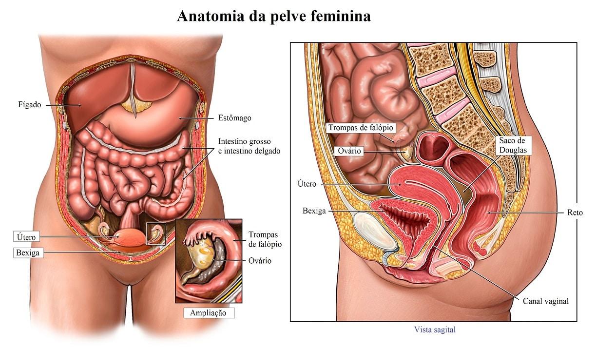 útero,ovário,trompas
