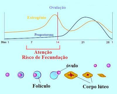 Calculadora da ovulação