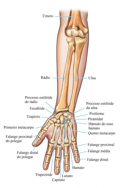 cúbito,rádio,puls,mão,ossos