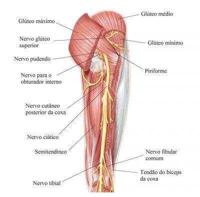 nervo-ciático