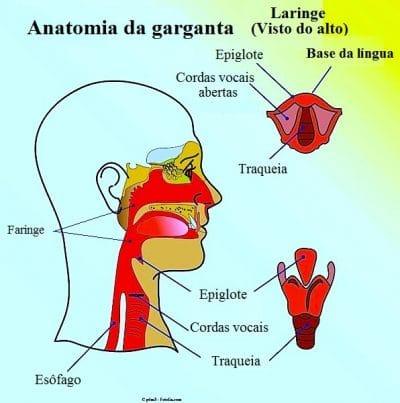 Fotos anatomia da garganta 85