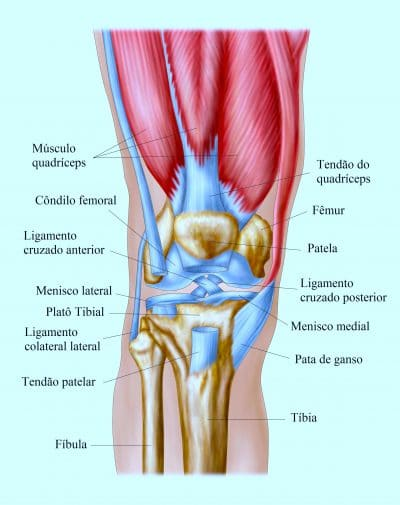 articulação,do,joelho,cruzados,meniscos