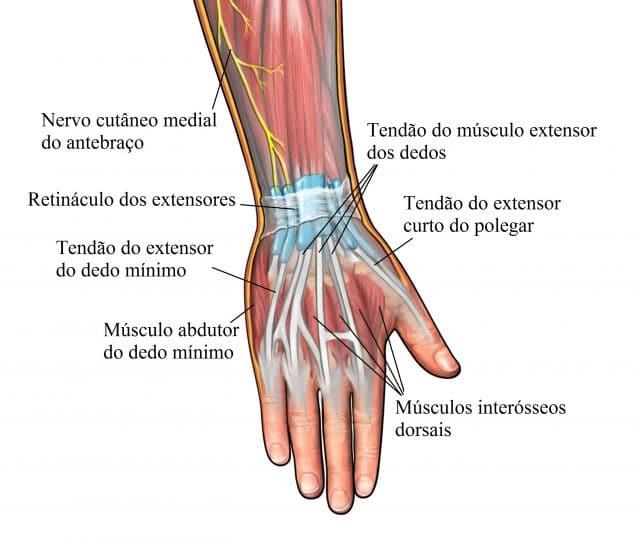 tendinite,mão,dedos