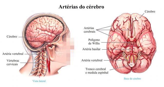 artérias,do,pescoço,e,cérebro