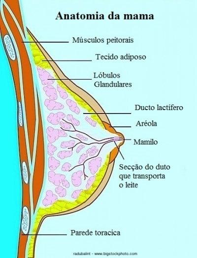 Anatomia da mama, secreção, branca