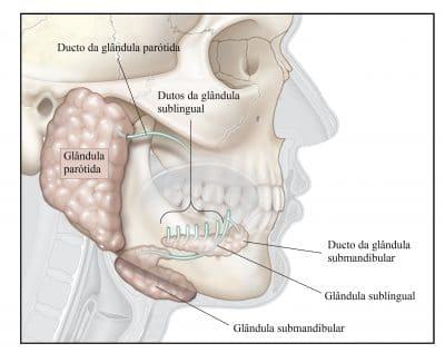 glândulas,salivares,parótida