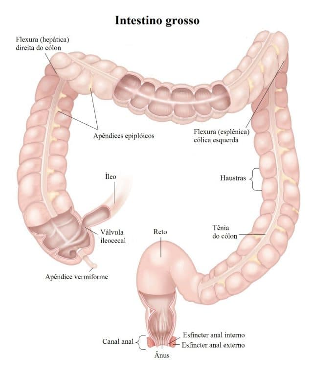 intestino,grosso