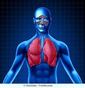Anatomia,pulmão,sinusite