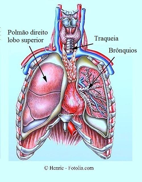 Plasticidade de redução de peito