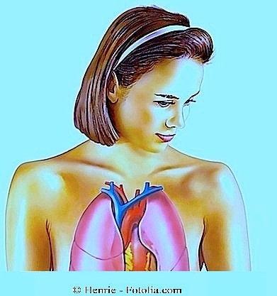 Anatomia dos pulmões, brônquios, garganta