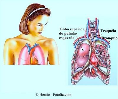 Anatomia,pulmões,brônquios,traquéia