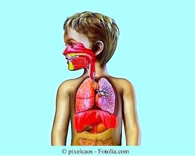 Anatomia,criança,pulmões,garganta, nariz