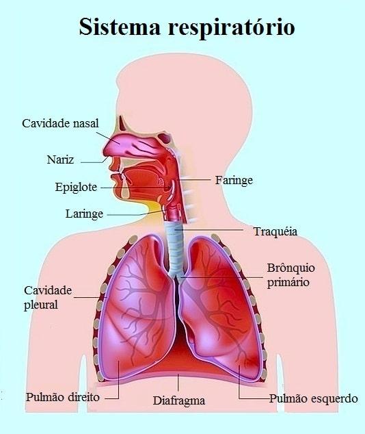 Resultado de imagem para hipertrofia das adenoides