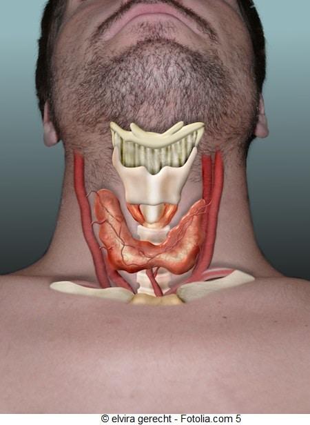 Tratamento para hipotireoidismo,metabolismo lento, ingordar,glândula tireóide