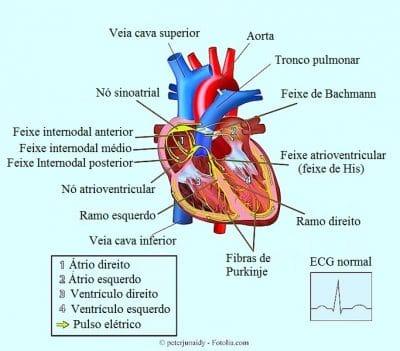 Extra-sístole ventricular