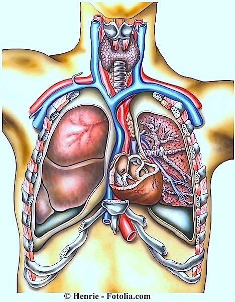Anginapectoris, toráx, peito