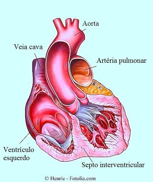 Coração,batimento cardíaco