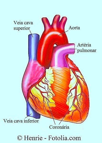 Arritmia cardíaca,coração