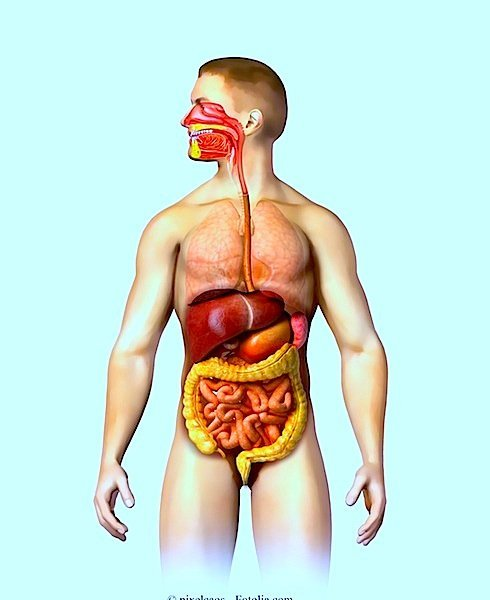Candida intestinais,sintomas,tratamento