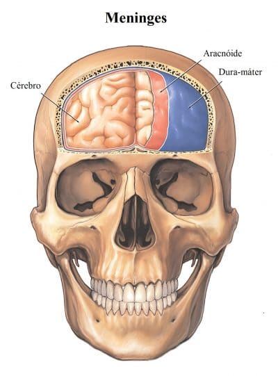 meninges-crânio