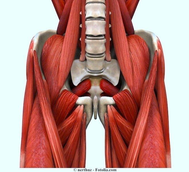 virilha,músculo, púbis,doca, direita,esquerda