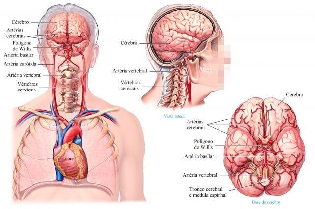artérias,cervical.cérebro