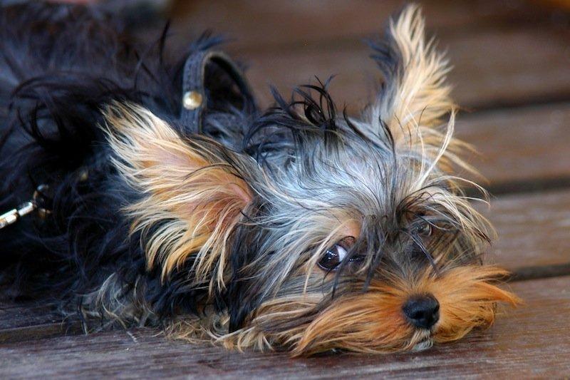 Alergia, cães, animais, gatos, reação