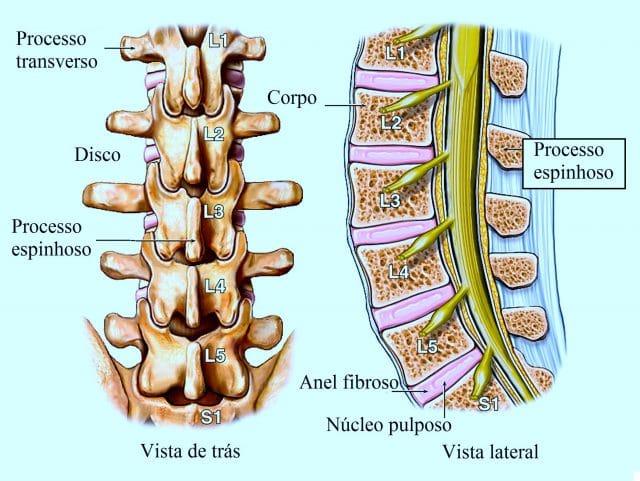 coluna,vertebral,lombar,e,nervos,espinhais