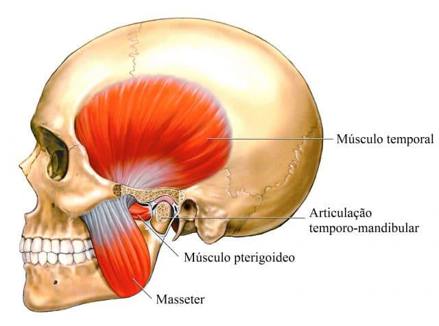 bruxismo,músculos,mastigação-masseter,temporal,pterigòideo