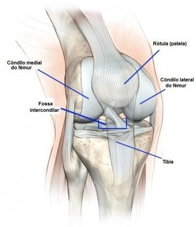 joelho,anatomia