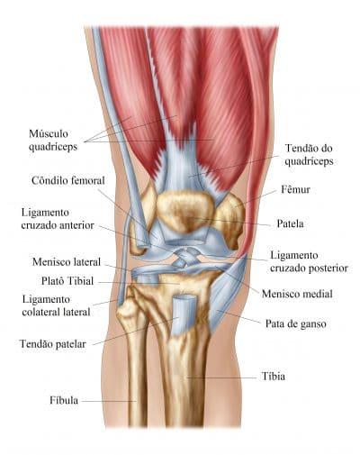 joelho,quadríceps,ligamentos,meniscos