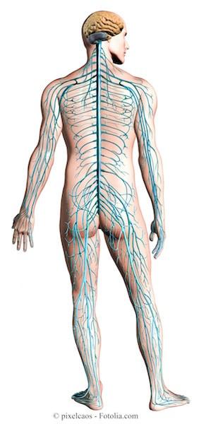 Dor nos nervos, sistema nervoso